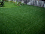 Milorganite and fungus : Organic lawn care